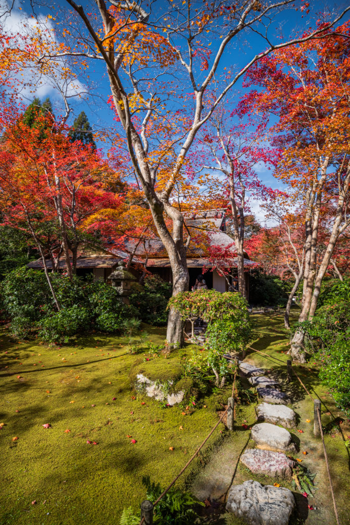 NIKON-CORPORATION_NIKON-D850_3249169970-3249292176_22001-682x1024 京都 紅葉の嵐山カメラ&観光おすすめの散策スポット ( 2019年 京都の秋、嵐山の綺麗な紅葉景色が見れる写真スポット・アクセス情報や交通手段など!)