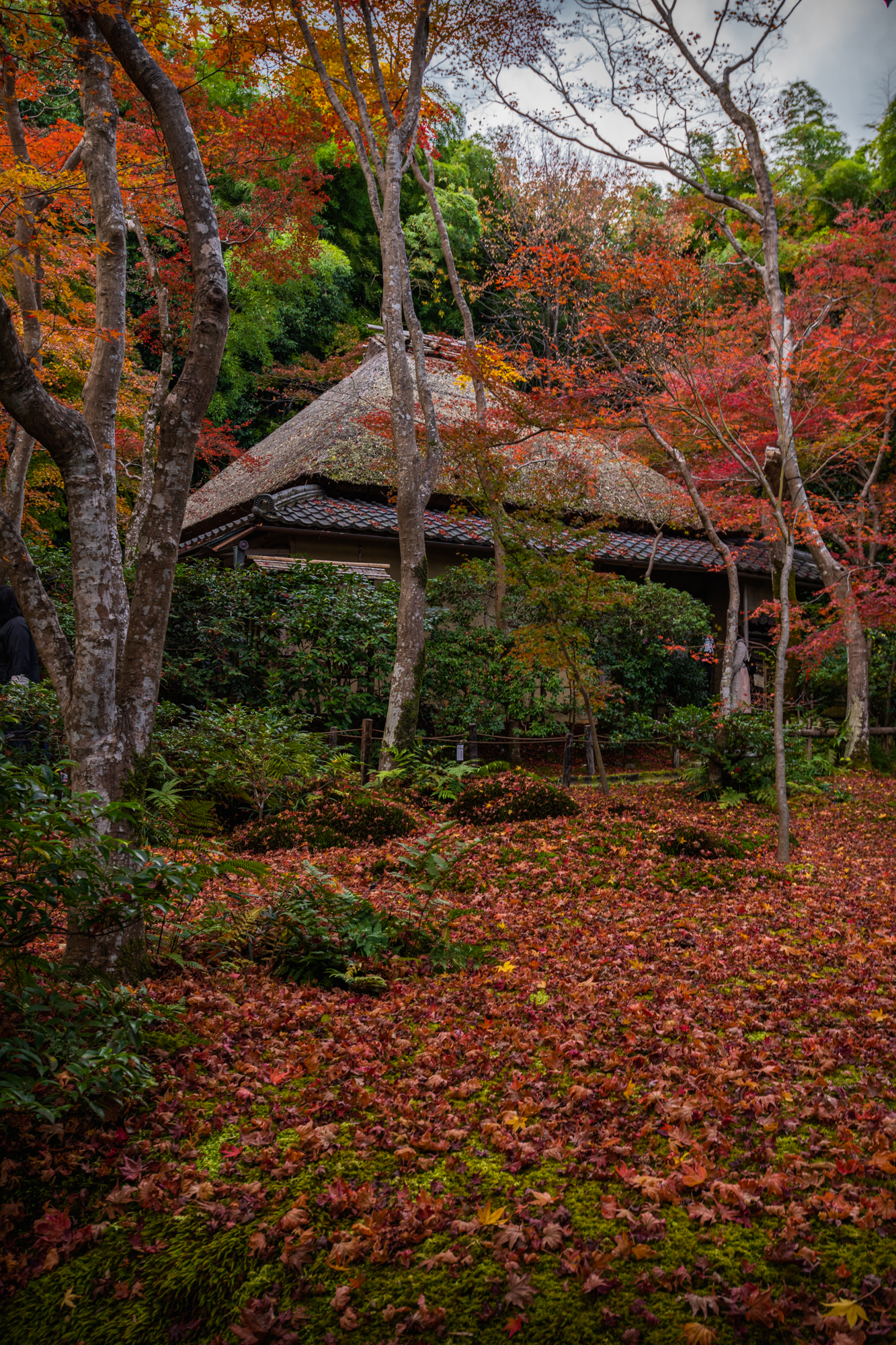 NIKON-CORPORATION_NIKON-D850_3254585714-3254697015_22050 京都  祇王寺  Kyoto Gioji temple(苔の庭が紅葉の絨毯に染まるおすすめの写真スポット!撮影した写真の紹介、アクセス情報や交通手段など!)
