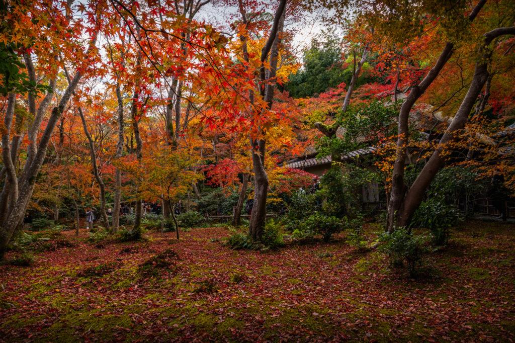 NIKON-CORPORATION_NIKON-D850_3257334898-3257448745_22075-1024x682 京都 紅葉の嵐山カメラ&観光おすすめの散策スポット ( 2019年 京都の秋、嵐山の綺麗な紅葉景色が見れる写真スポット・アクセス情報や交通手段など!)