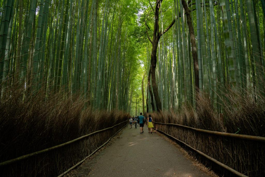 NIKON-CORPORATION_NIKON-D800E_526652466-526738028_5246-1024x683 京都 紅葉の嵐山カメラ&観光おすすめの散策スポット ( 2019年 京都の秋、嵐山の綺麗な紅葉景色が見れる写真スポット・アクセス情報や交通手段など!)