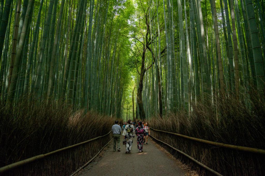 NIKON-CORPORATION_NIKON-D800E_527232434-527311457_5253-1024x683 京都 紅葉の嵐山カメラ&観光おすすめの散策スポット ( 2019年 京都の秋、嵐山の綺麗な紅葉景色が見れる写真スポット・アクセス情報や交通手段など!)
