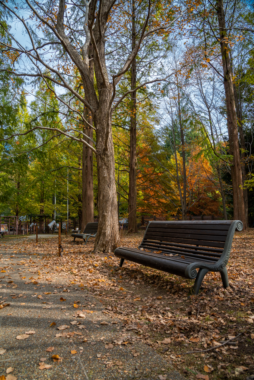 NIKON-CORPORATION_NIKON-D800E_797980018-798078303_8475 兵庫県  神戸市立森林植物園 (園内が紅葉の景色に染まる秋におすすめの森林植物園! 撮影した写真の紹介、アクセス情報や撮影ポイントなど!)