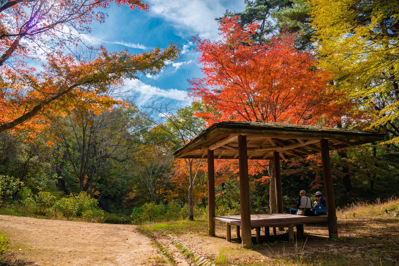 NIKON-CORPORATION_NIKON-D800E_802172722-802258881_8520 兵庫県  神戸市立森林植物園 (園内が紅葉の景色に染まる秋におすすめの森林植物園! 撮影した写真の紹介、アクセス情報や撮影ポイントなど!)
