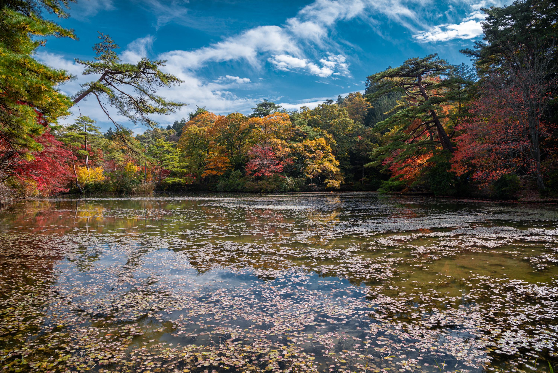NIKON-CORPORATION_NIKON-D800E_802348658-802438119_8522 兵庫県  神戸市立森林植物園 (園内が紅葉の景色に染まる秋におすすめの森林植物園! 撮影した写真の紹介、アクセス情報や撮影ポイントなど!)