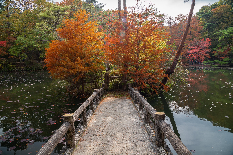 NIKON-CORPORATION_NIKON-D800E_818276978-818366993_8701 兵庫県  神戸市立森林植物園 (2019年  秋におすすめ! 一面紅葉の景色に染まる神戸の森林植物園! 関西・近畿・兵庫県の紅葉写真スポット! アクセス情報や撮影ポイントなど!)