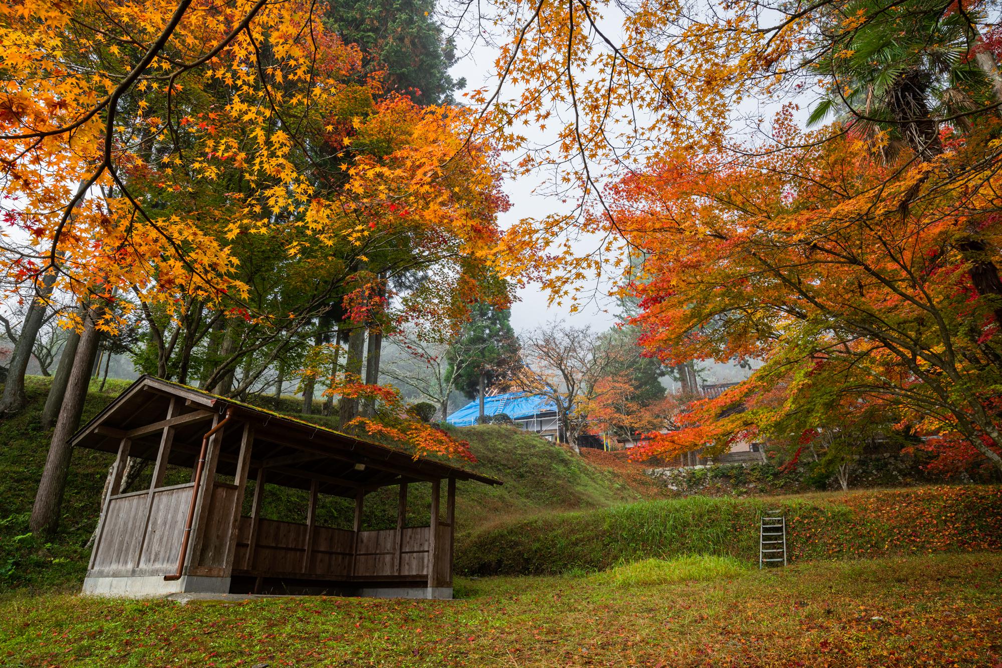 NIKON-CORPORATION_NIKON-D85021355-1 京都  龍穏寺 Kyoto Ryoonji temple( 2019年 京都の秋、南丹市にある境内へ続く紅葉のトンネルが美しいおすすめの写真スポット・アクセス情報・駐車場・交通手段など!)