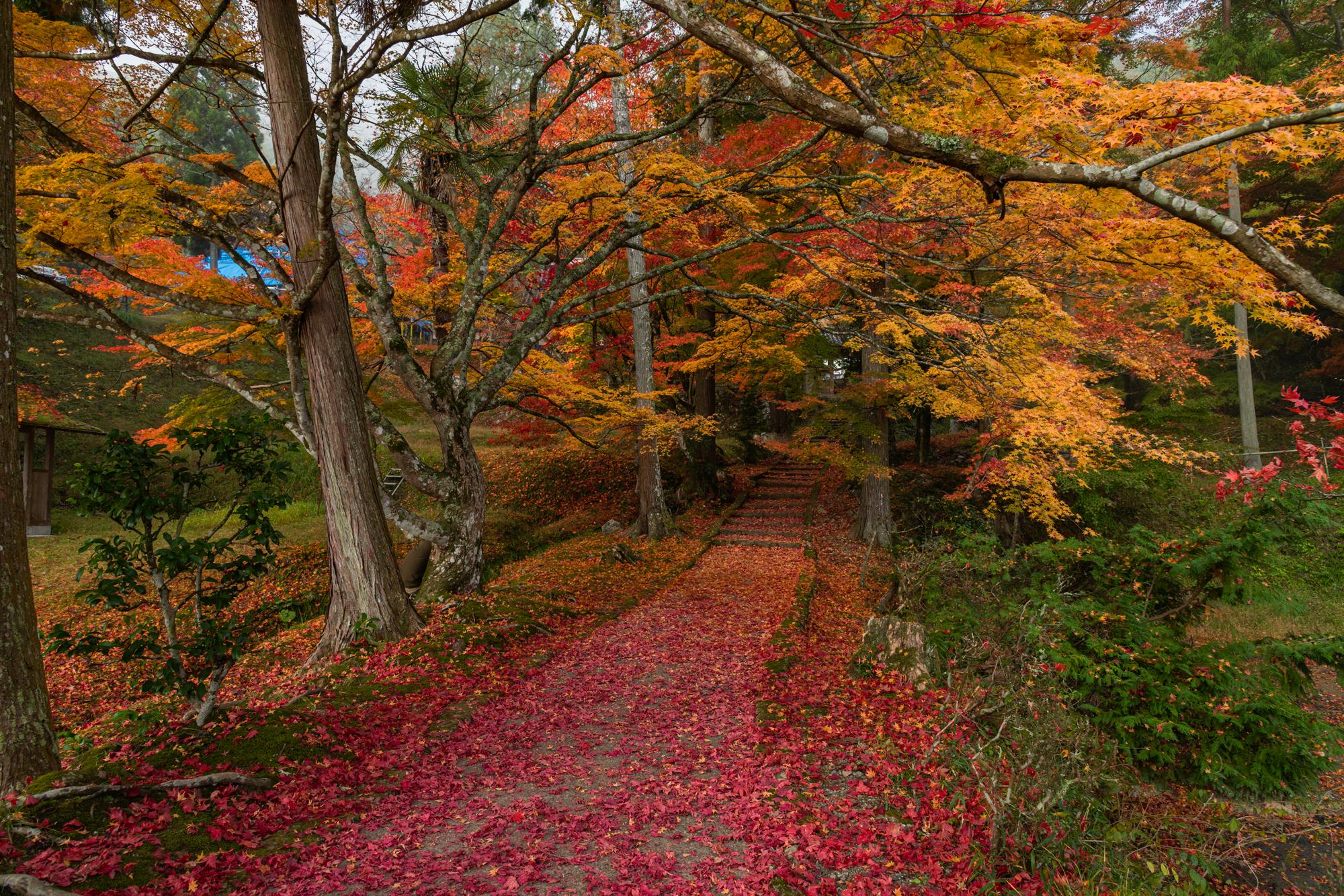 NIKON-CORPORATION_NIKON-D850_2785361074-2785469014_20909 京都  龍穏寺 Kyoto Ryoonji temple( 南丹市にある境内へ続く紅葉のトンネルが美しいおすすめの写真スポット!撮影した写真の紹介、アクセス情報・駐車場・交通手段など!)