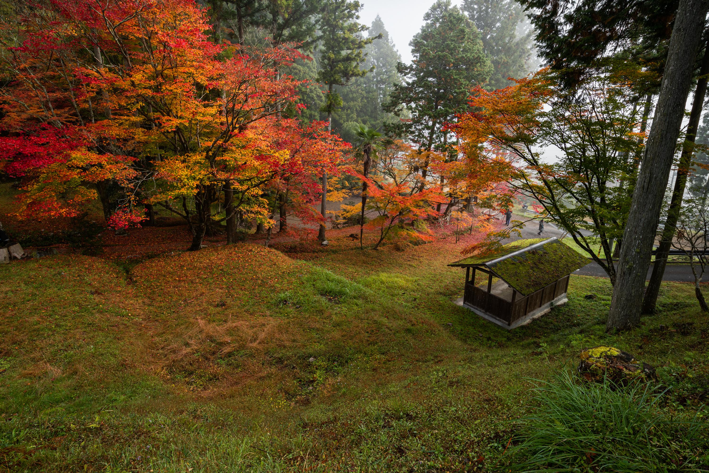 NIKON-CORPORATION_NIKON-D850_3018215282-3018328738_21388 京都  龍穏寺 Kyoto Ryoonji temple( 2019年 京都の秋、南丹市にある境内へ続く紅葉のトンネルが美しいおすすめの写真スポット・アクセス情報・駐車場・交通手段など!)