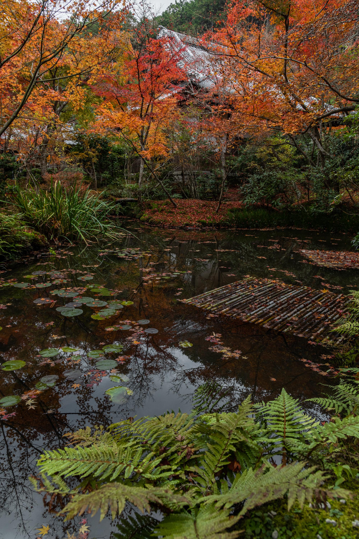 NIKON-CORPORATION_NIKON-D850_3053662962-3053770544_21433 京都  圓光寺  Kyoto Enkoji Temple( 2019年 京都の秋、紅葉の庭園が美しいおすすめの写真スポット・アクセス情報や交通手段など!)