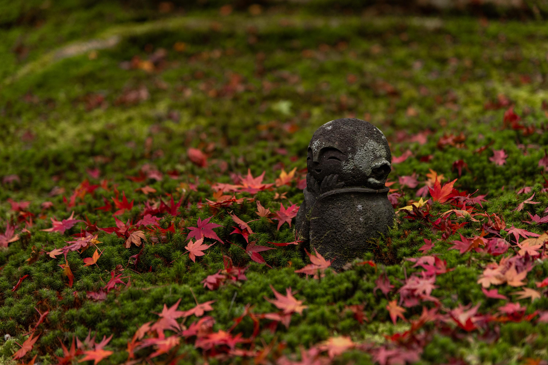 NIKON-CORPORATION_NIKON-D850_3119591666-3119688916_21524 京都  圓光寺  Kyoto Enkoji Temple( 2019年 京都の秋、紅葉の庭園が美しいおすすめの写真スポット・アクセス情報や交通手段など!)