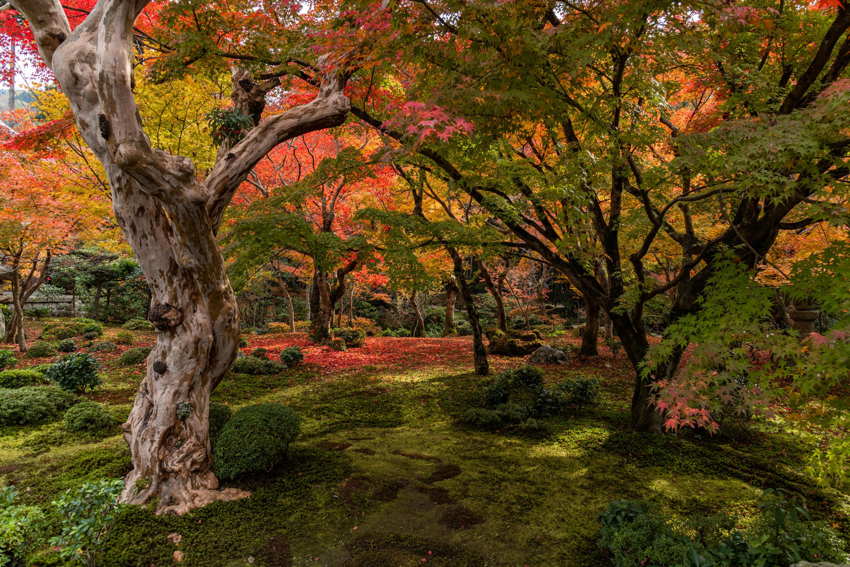 NIKON-CORPORATION_NIKON-D850_3119885298-3119996639_21525 京都  圓光寺  Kyoto Enkoji Temple( 2019年 京都の秋、紅葉の庭園が美しいおすすめの写真スポット・アクセス情報や交通手段など!)