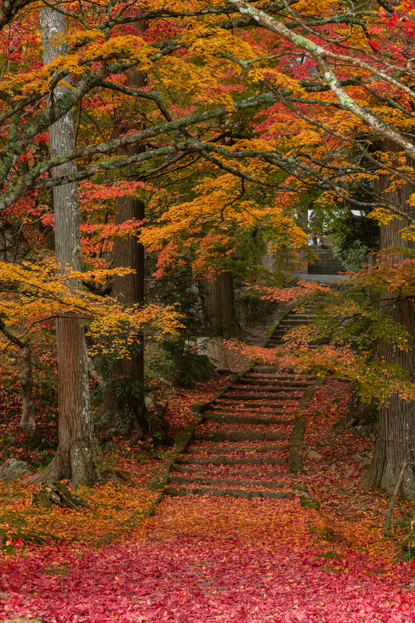 NIKON-CORPORATION_NIKON-D850_3500461042-3500571802_22858 京都  龍穏寺 Kyoto Ryoonji temple( 南丹市にある境内へ続く紅葉のトンネルが美しいおすすめの写真スポット!撮影した写真の紹介、アクセス情報・駐車場・交通手段など!)