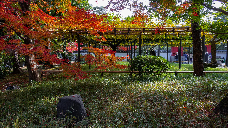 DSC01349 京都  平等院( 紅葉の庭園が美しい秋におすすめの写真スポット!撮影した写真の紹介、アクセス情報や交通手段など)
