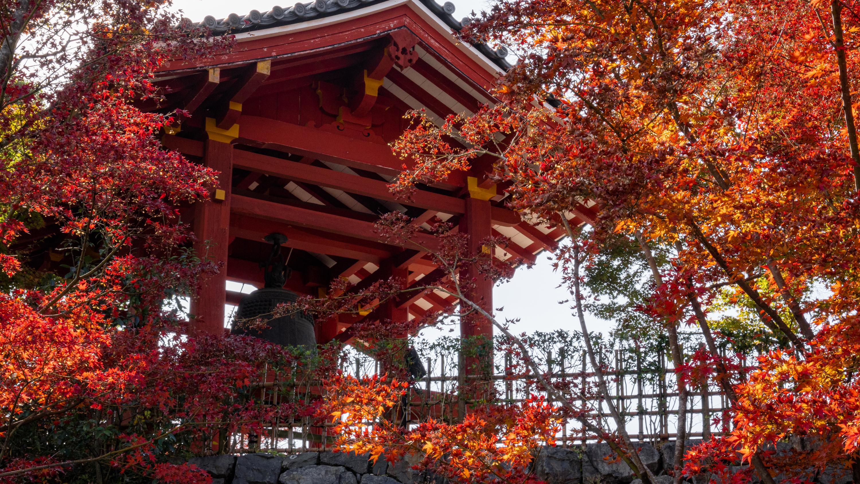 DSC01371 京都  平等院( 紅葉の庭園が美しい秋におすすめの写真スポット!撮影した写真の紹介、アクセス情報や交通手段など)