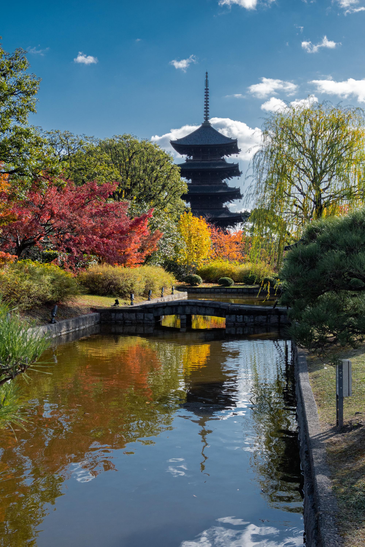 DSC01428 京都  東寺  Kyoto Toji Temple( 2019年 京都の秋、紅葉の庭園が美しいおすすめの写真スポット・アクセス情報や交通手段など!)
