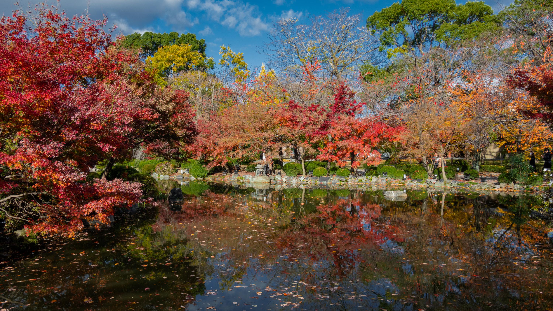 DSC01481 京都  東寺  Kyoto Toji Temple( 2019年 京都の秋、紅葉の庭園が美しいおすすめの写真スポット・アクセス情報や交通手段など!)