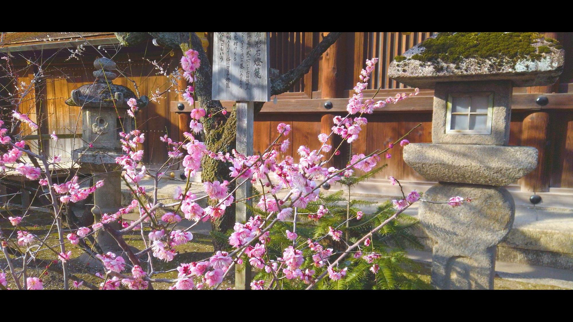 0eac970d6461c36752be6cda681bb823-e1582382850250 京都府 北野天満宮 Kitano Tenmangu (2020年 京都の春におすすめ梅苑・梅林スポット! 撮影した写真の紹介、ライトアップ・アクセス情報や交通手段・駐車場情報などまとめ)