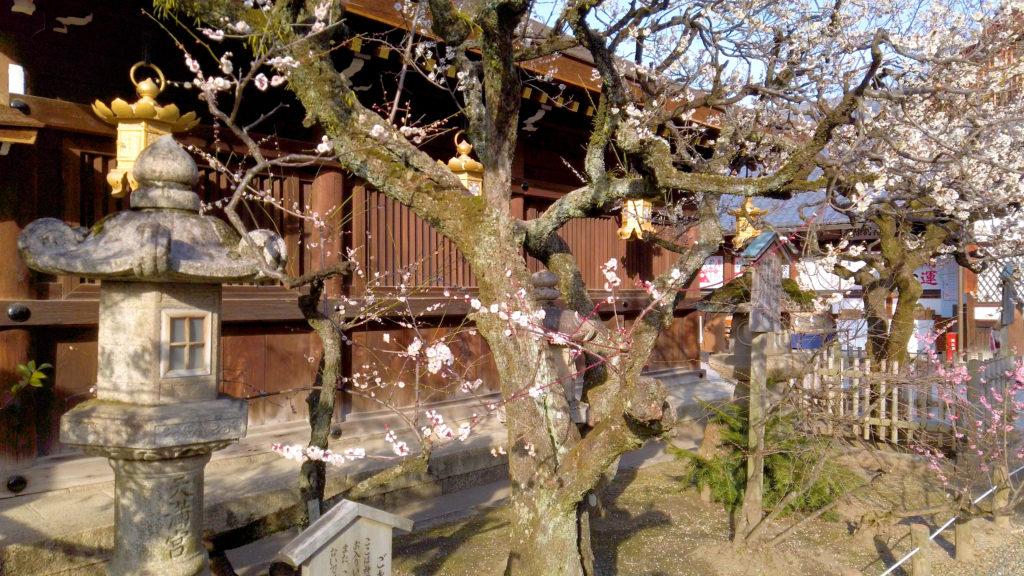 1d3e1f4d1d3fcb3cda45c9030e9c7d52-1024x576 京都府 北野天満宮 Kitano Tenmangu (2020年 京都の春におすすめ梅苑・梅林スポット! 撮影した写真の紹介、ライトアップ・アクセス情報や交通手段・駐車場情報などまとめ)