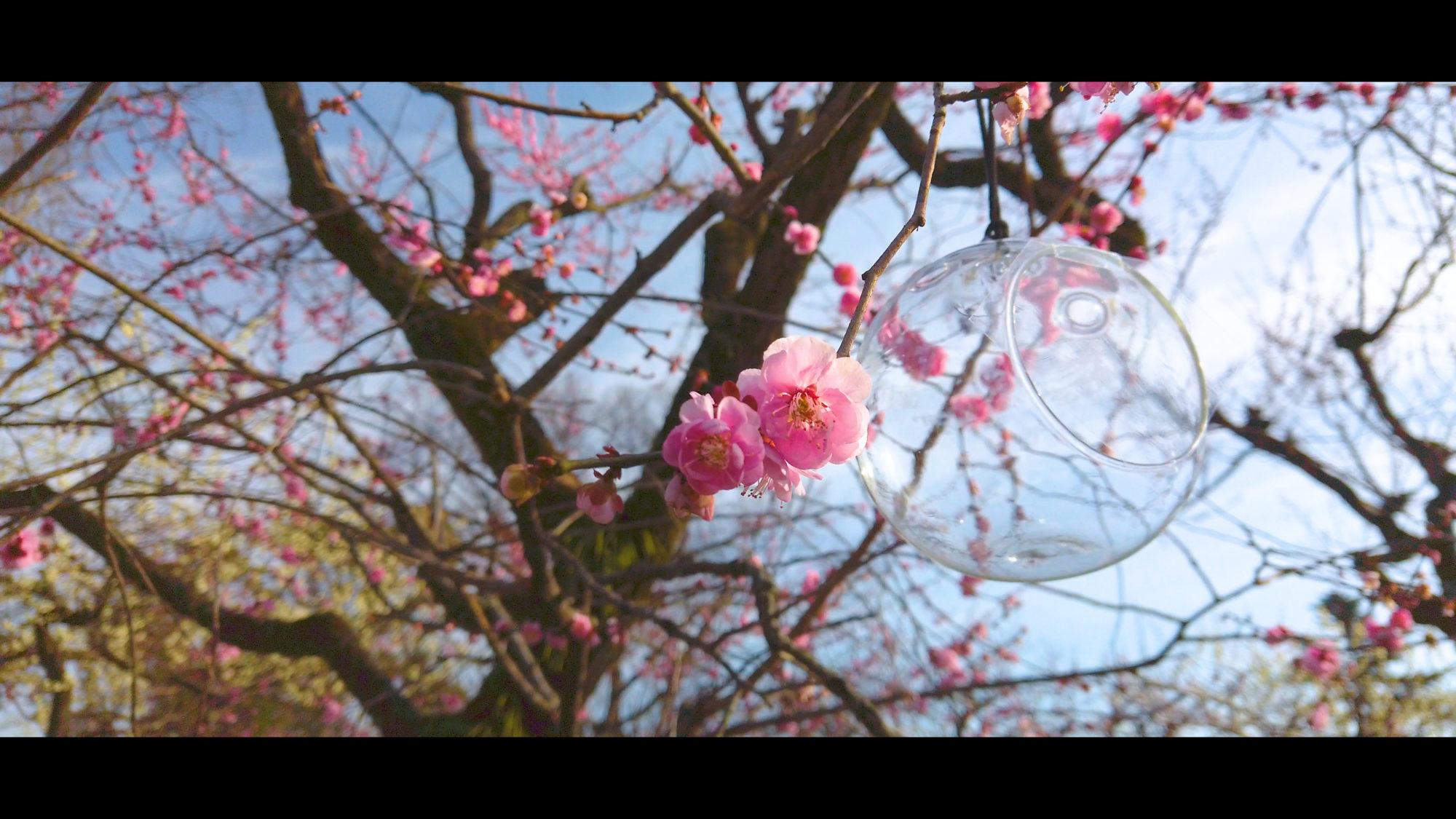 831b33430b367dfe59b2e15eebfe5fff-e1582382845551 京都府 北野天満宮 Kitano Tenmangu (2020年 京都の春におすすめ梅苑・梅林スポット! 撮影した写真の紹介、ライトアップ・アクセス情報や交通手段・駐車場情報などまとめ)