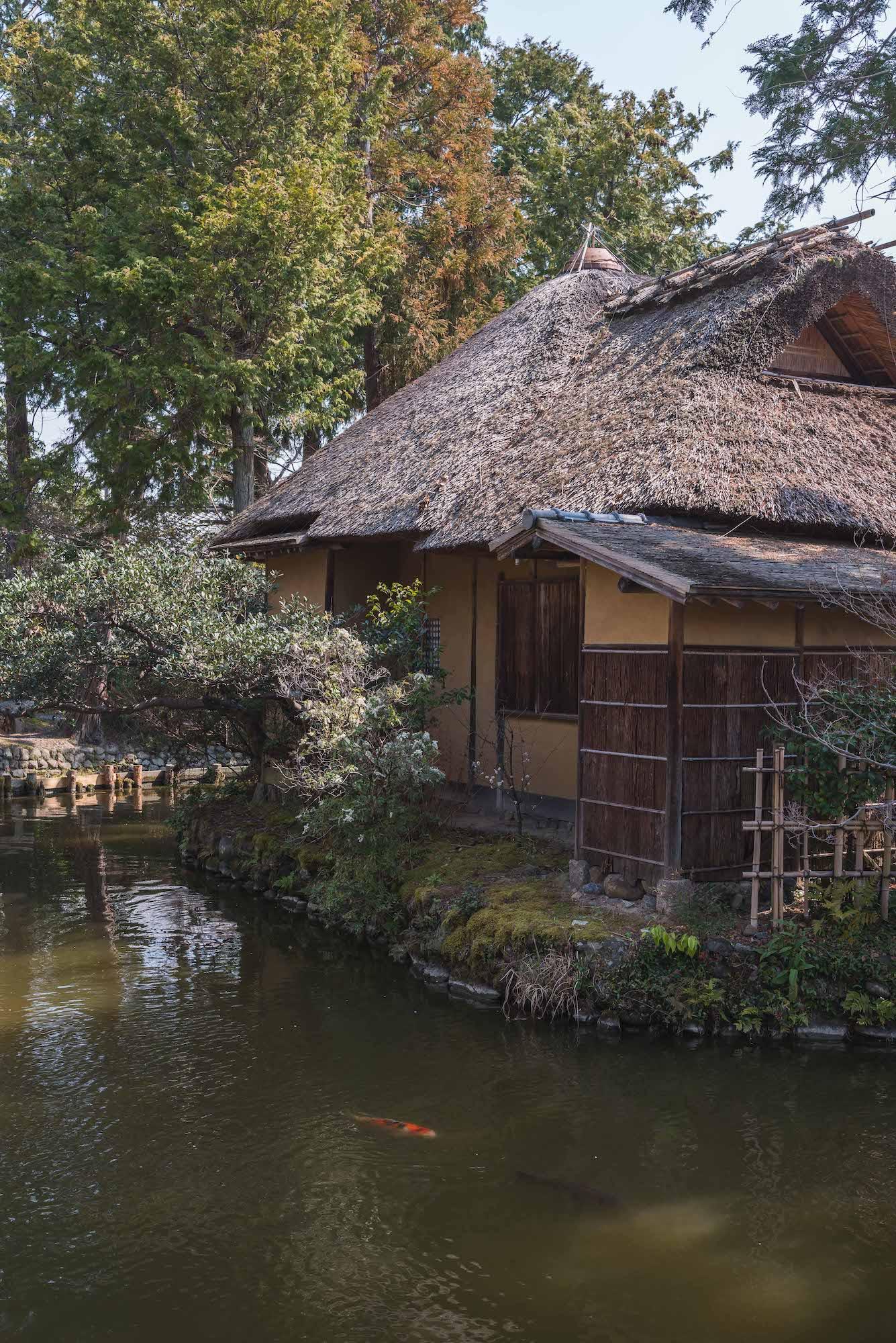 DSC_2121 京都 梅宮大社(境内に咲く35種500本の梅と猫神社で人気の写真スポット。 アクセス情報や交通手段・駐車場情報などまとめ)