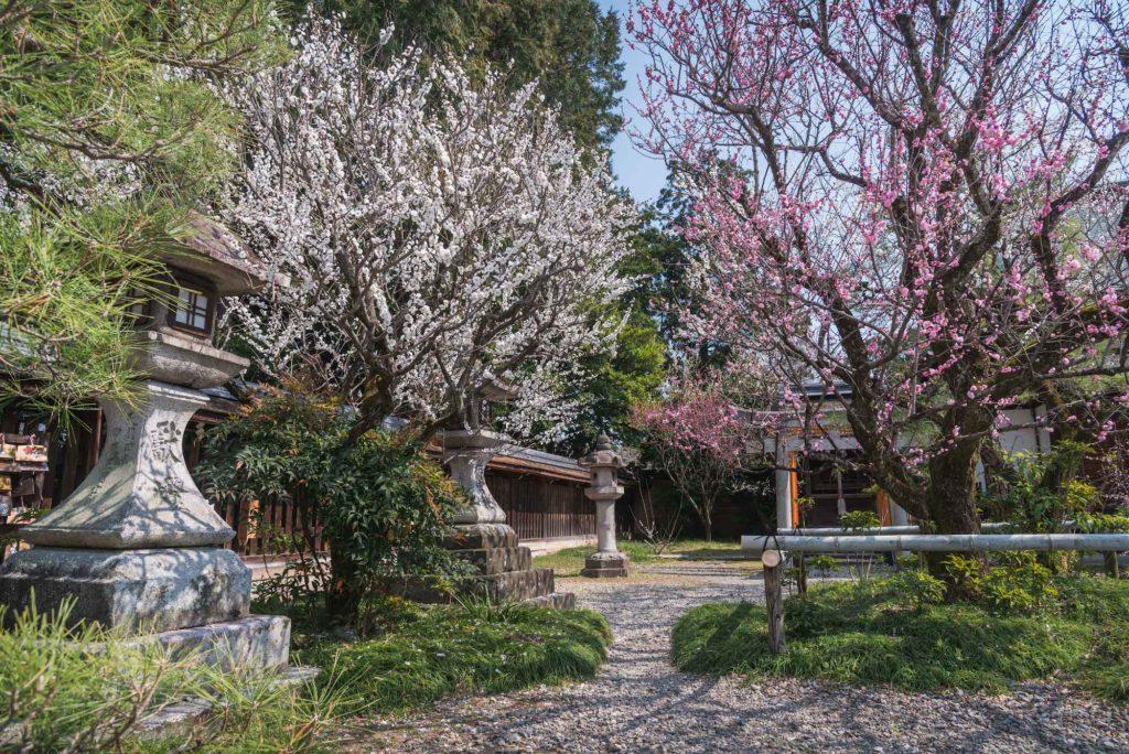 """DSC_2189-1024x684 【2020年】関西の『梅林・梅園』おすすめ写真スポット""""9選""""を紹介! 開花情報や見頃情報などを実際に訪れ撮影した写真とお届けします!"""
