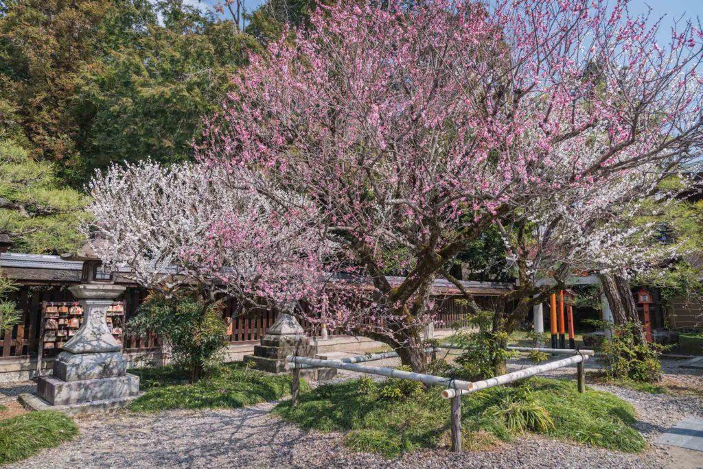 """DSC_2200-1024x684 【2020年】関西の『梅林・梅園』おすすめ写真スポット""""9選""""を紹介! 開花情報や見頃情報などを実際に訪れ撮影した写真とお届けします!"""