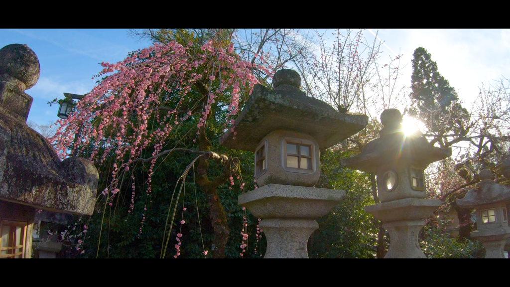 """b7f2f18864aa85a4e6954716055b13ab-1024x576 【2020年】関西の『梅林・梅園』おすすめ写真スポット""""9選""""を紹介! 開花情報や見頃情報などを実際に訪れ撮影した写真とお届けします!"""