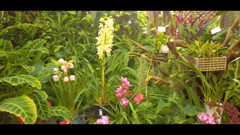0b3592ca35ddb91c6288b43849b4425a-e1582727999772 大阪府 花の文化園(こたつに入って梅の見物ができる春におすすめの写真スポット. アクセス情報や交通手段・駐車場情報などまとめ)