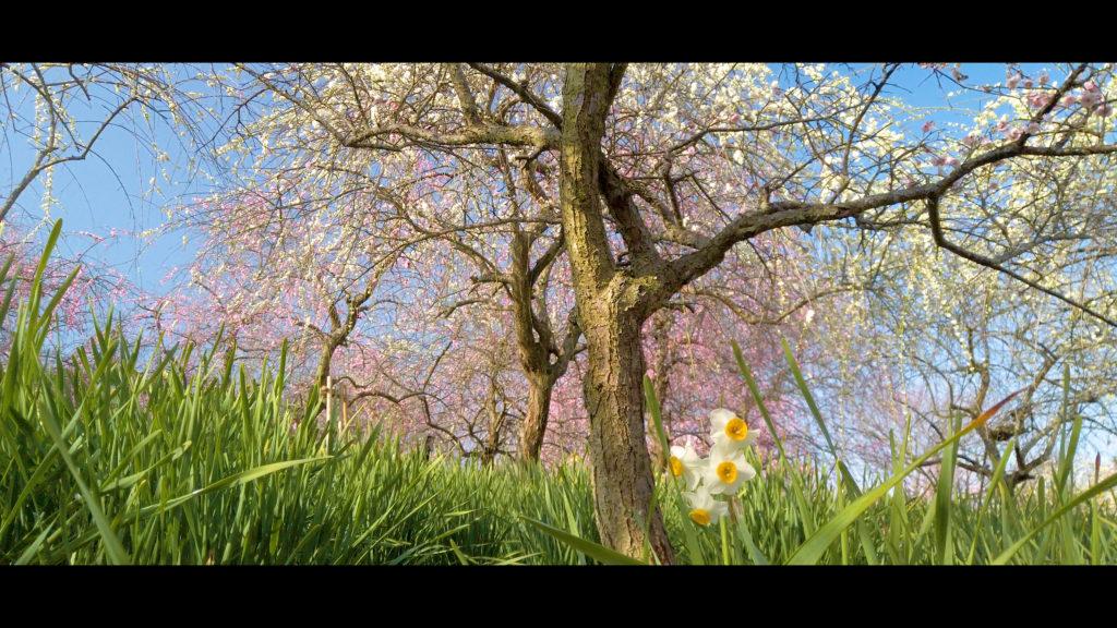 """17cda18e6efa3df00ba1eff4b64e85ad-1024x576 【2020年】関西の『梅林・梅園』おすすめ写真スポット""""9選""""を紹介! 開花情報や見頃情報などを実際に訪れ撮影した写真とお届けします!"""