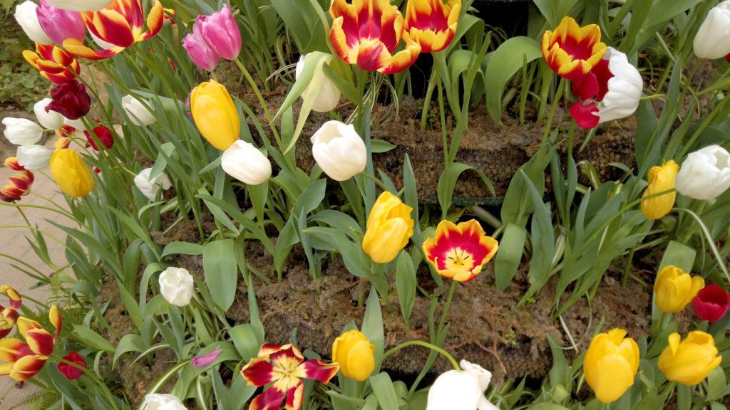 1966e96b2b273f5e3b53ded0fb285029-1024x576 大阪府 花の文化園(こたつに入って梅の見物ができる春におすすめの写真スポット. アクセス情報や交通手段・駐車場情報などまとめ)