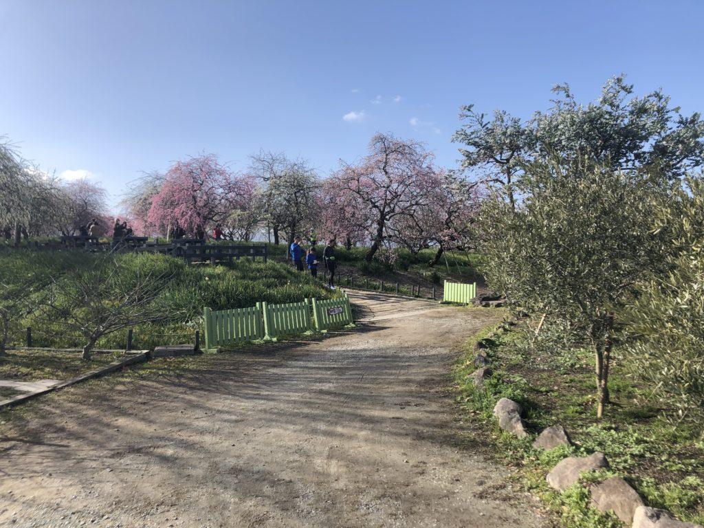 2e02a4ce33d88af119af0c83a612ce9f-1024x768 大阪府 和泉リサイクル環境公園(梅と水仙、菜の花が撮影できる春におすすめの写真スポット。 撮影した写真の紹介、アクセス情報や交通手段・駐車場情報などまとめ)