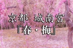 3a7ce531ca9b2533752928e21024e9af-300x200 京都-城南宮