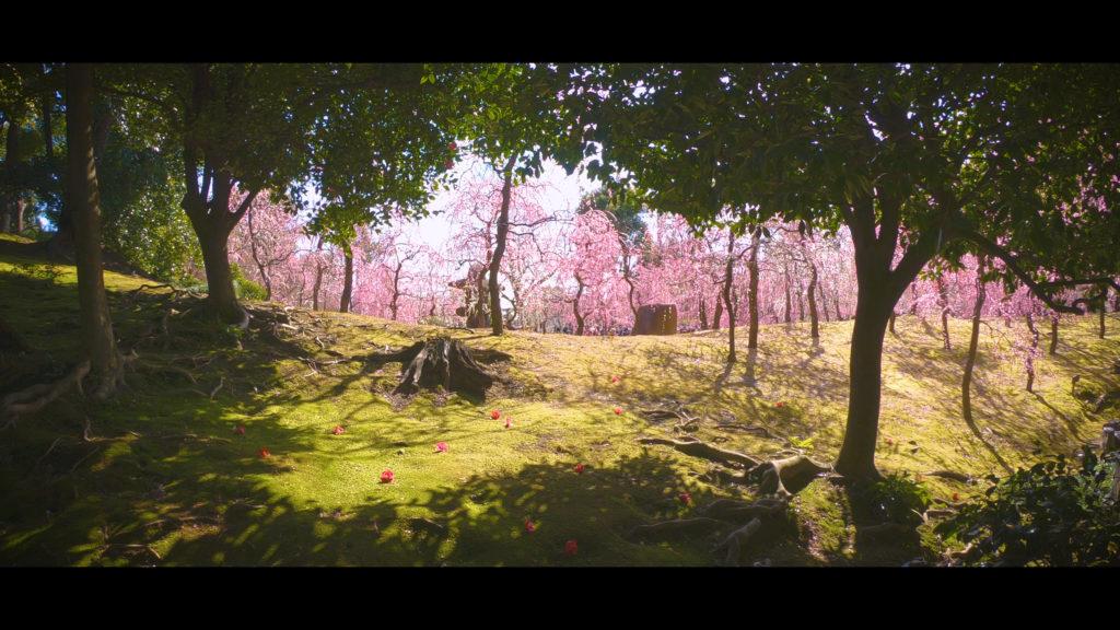 """51a1263d650d3d494b977f6eedd65a9e-1024x576 【2020年】関西の『梅林・梅園』おすすめ写真スポット""""9選""""を紹介! 開花情報や見頃情報などを実際に訪れ撮影した写真とお届けします!"""