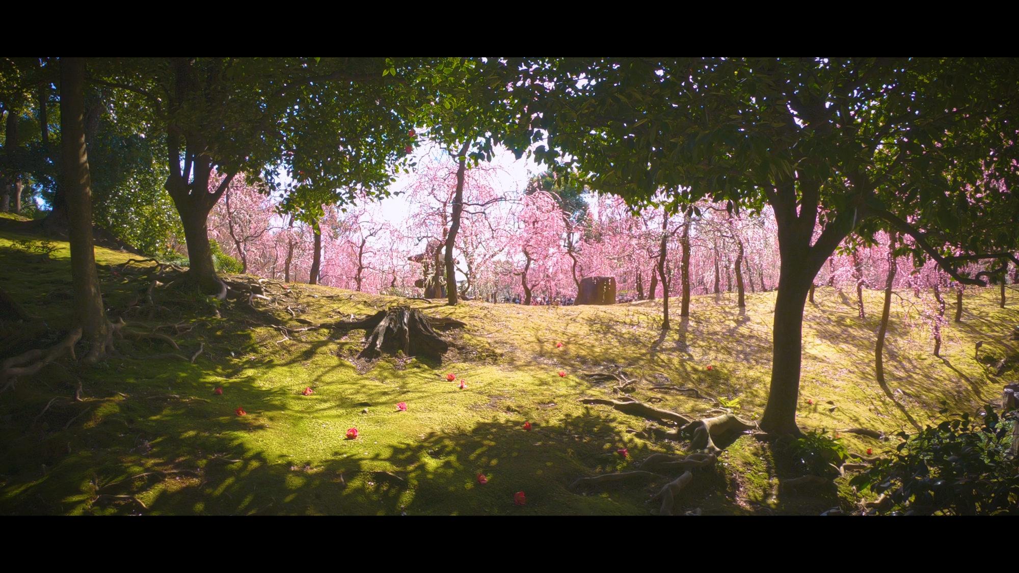 51a1263d650d3d494b977f6eedd65a9e-e1582335853777 京都 城南宮(※2/22現在見頃です!  2020年 春にオススメ。庭園に咲く150本の枝垂梅が絶景の写真スポット。 アクセス情報や交通手段・駐車場情報などまとめ)