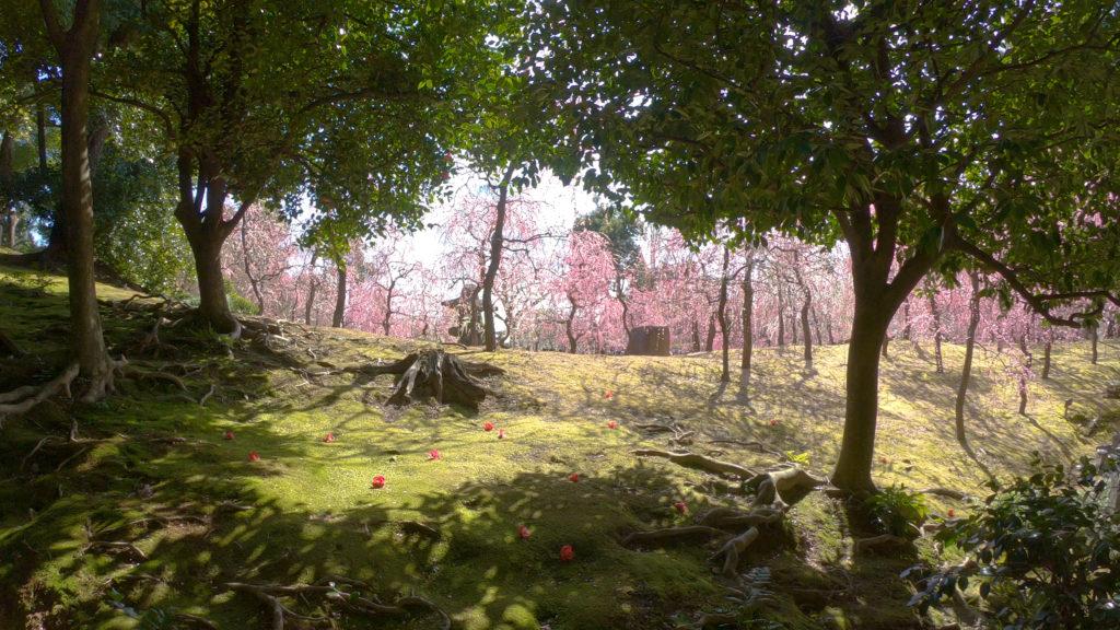 6f4261d534918af13bdd65da9caf6452-1024x576 京都 城南宮(※2/22現在見頃です!  2020年 春にオススメ。庭園に咲く150本の枝垂梅が絶景の写真スポット。 アクセス情報や交通手段・駐車場情報などまとめ)