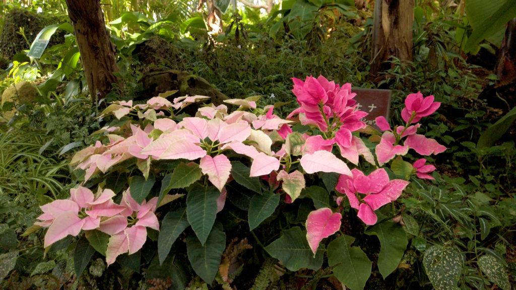 80f8a40b528d2c51ce3dca0c74baea41-1024x576 大阪府 花の文化園(こたつに入って梅の見物ができる春におすすめの写真スポット. アクセス情報や交通手段・駐車場情報などまとめ)