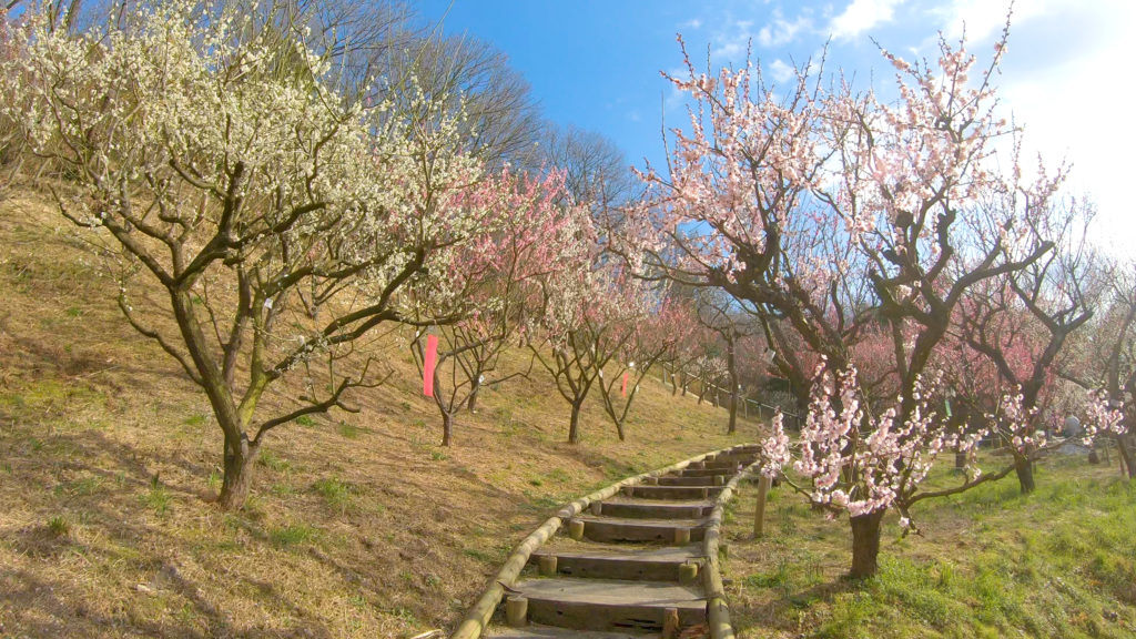 9a0b5440a6f9eeb9fdbb79116d915aac-1024x576 大阪府 花の文化園(こたつに入って梅の見物ができる春におすすめの写真スポット. アクセス情報や交通手段・駐車場情報などまとめ)