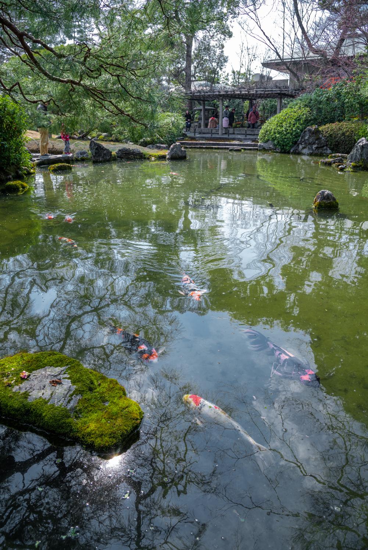 NIKON-CORPORATION_NIKON-D800E_304140722-304240804_2859 京都 城南宮(※2/22現在見頃です!  2020年 春にオススメ。庭園に咲く150本の枝垂梅が絶景の写真スポット。 アクセス情報や交通手段・駐車場情報などまとめ)