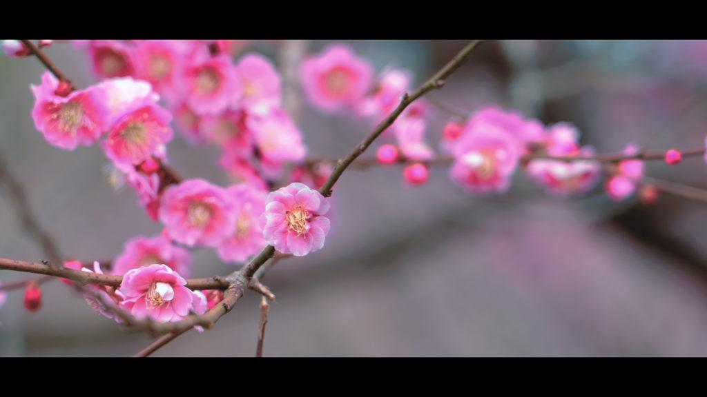 """a29e0faf1364e0ed7e3d7c1e261cda29-1024x576 【2020年】関西の『梅林・梅園』おすすめ写真スポット""""9選""""を紹介! 開花情報や見頃情報などを実際に訪れ撮影した写真とお届けします!"""