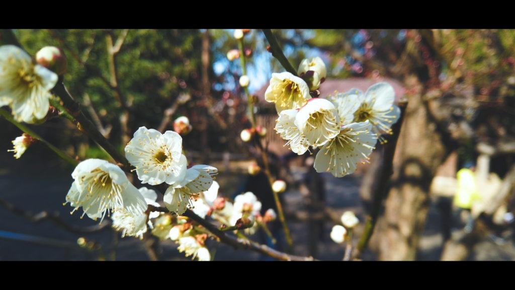 """a8be39b43430a127b593f6d168761226-1024x576 【2020年】関西の『梅林・梅園』おすすめ写真スポット""""9選""""を紹介! 開花情報や見頃情報などを実際に訪れ撮影した写真とお届けします!"""