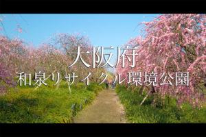 b7594cf4baa7c899cbdb73e8f679faee-1-300x200 京都以外ブログアイキャッチ用