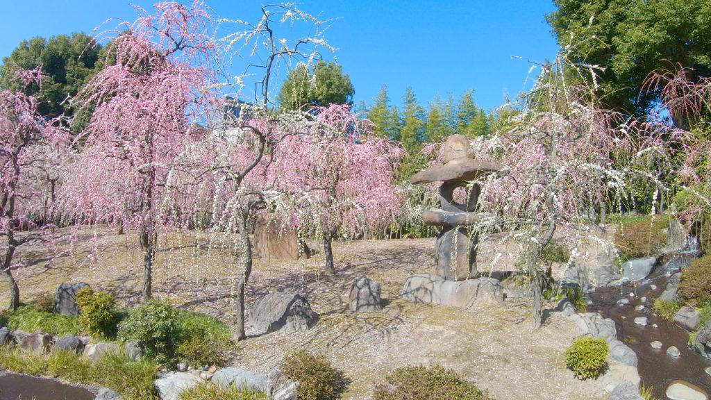 ba947c757c61c6b3b9bd641c85f69a13-1024x576 京都 城南宮(※2/22現在見頃です!  2020年 春にオススメ。庭園に咲く150本の枝垂梅が絶景の写真スポット。 アクセス情報や交通手段・駐車場情報などまとめ)