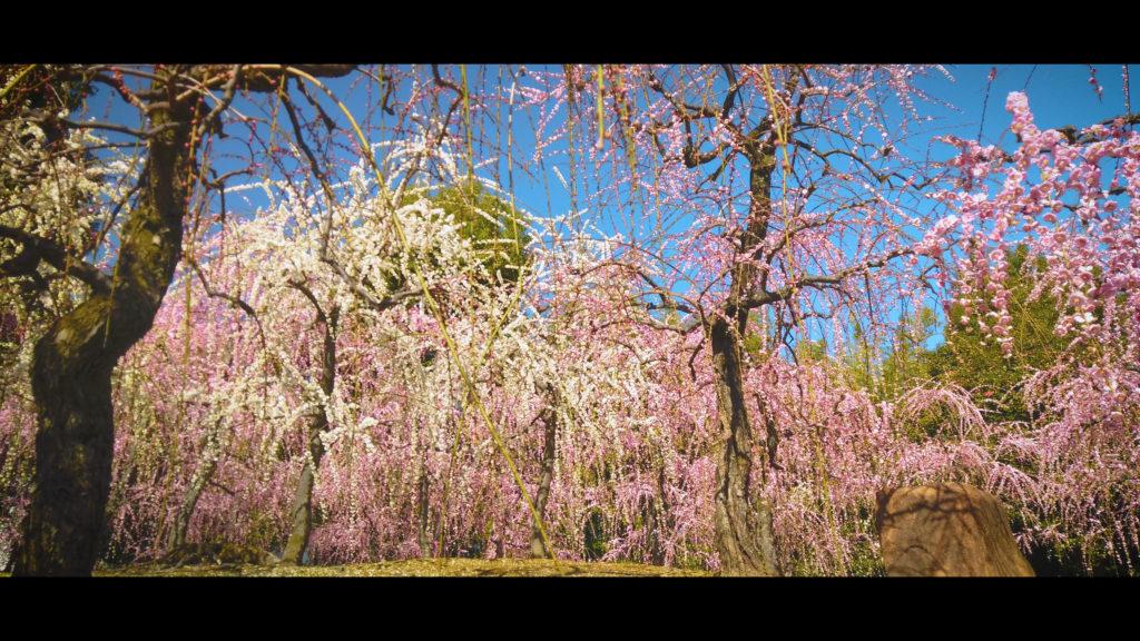 """bb78efd0eb5b50469d9c245fc1ae37e0-1024x576 【2020年】関西の『梅林・梅園』おすすめ写真スポット""""9選""""を紹介! 開花情報や見頃情報などを実際に訪れ撮影した写真とお届けします!"""