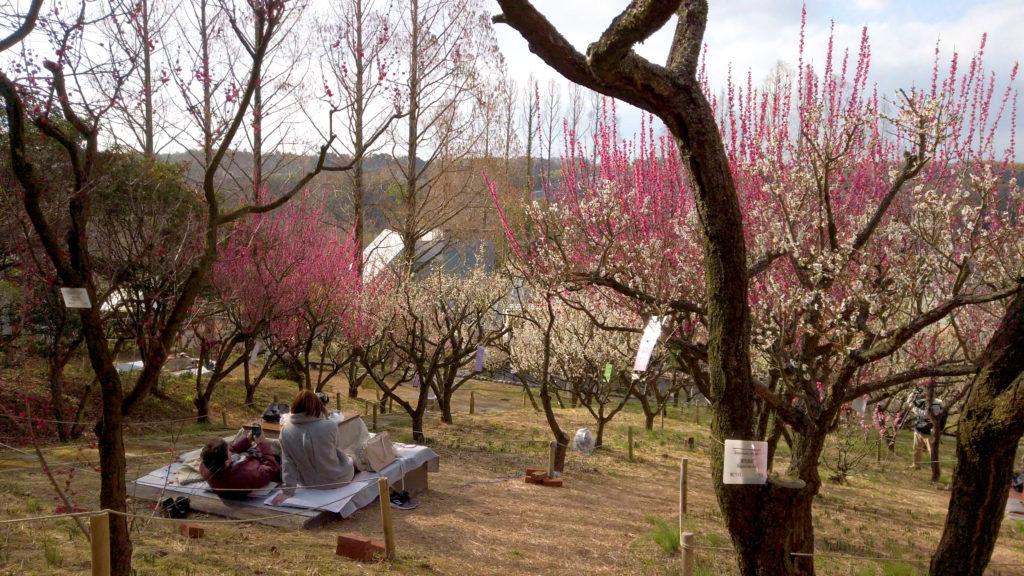 d128e7022379adc8c2263a904dda060d-1024x576 大阪府 花の文化園(こたつに入って梅の見物ができる春におすすめの写真スポット. アクセス情報や交通手段・駐車場情報などまとめ)