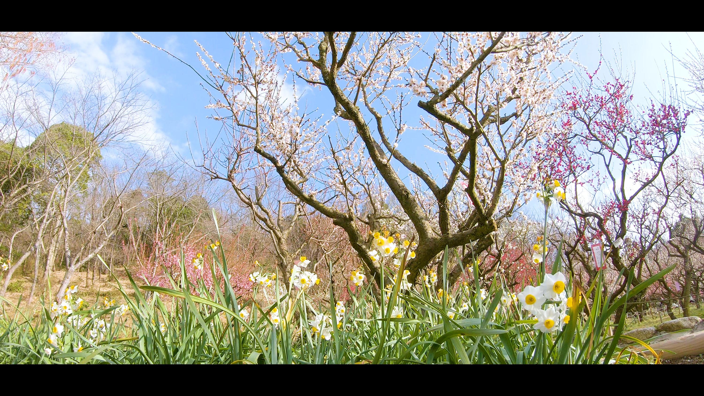 db87d83df324c1c452f3208982a71489-e1582727957740 大阪府 花の文化園(こたつに入って梅の見物ができる春におすすめの写真スポット. アクセス情報や交通手段・駐車場情報などまとめ)
