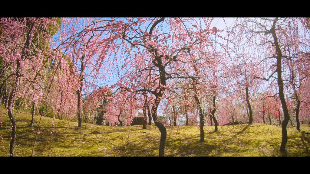 """e525f3a12c51f2c078fd088851ef8180-1024x576 【2020年】関西の『梅林・梅園』おすすめ写真スポット""""9選""""を紹介! 開花情報や見頃情報などを実際に訪れ撮影した写真とお届けします!"""