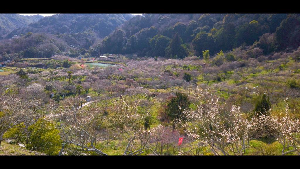"f84781b423cf70d7113aaf18a1b43429-1024x576 【2020年】関西の『梅林・梅園』おすすめ写真スポット""9選""を紹介! 開花情報や見頃情報などを実際に訪れ撮影した写真とお届けします!"
