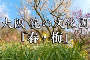 f92880f32fc148ffddda5e4a811e7d14-300x200 花の文化園
