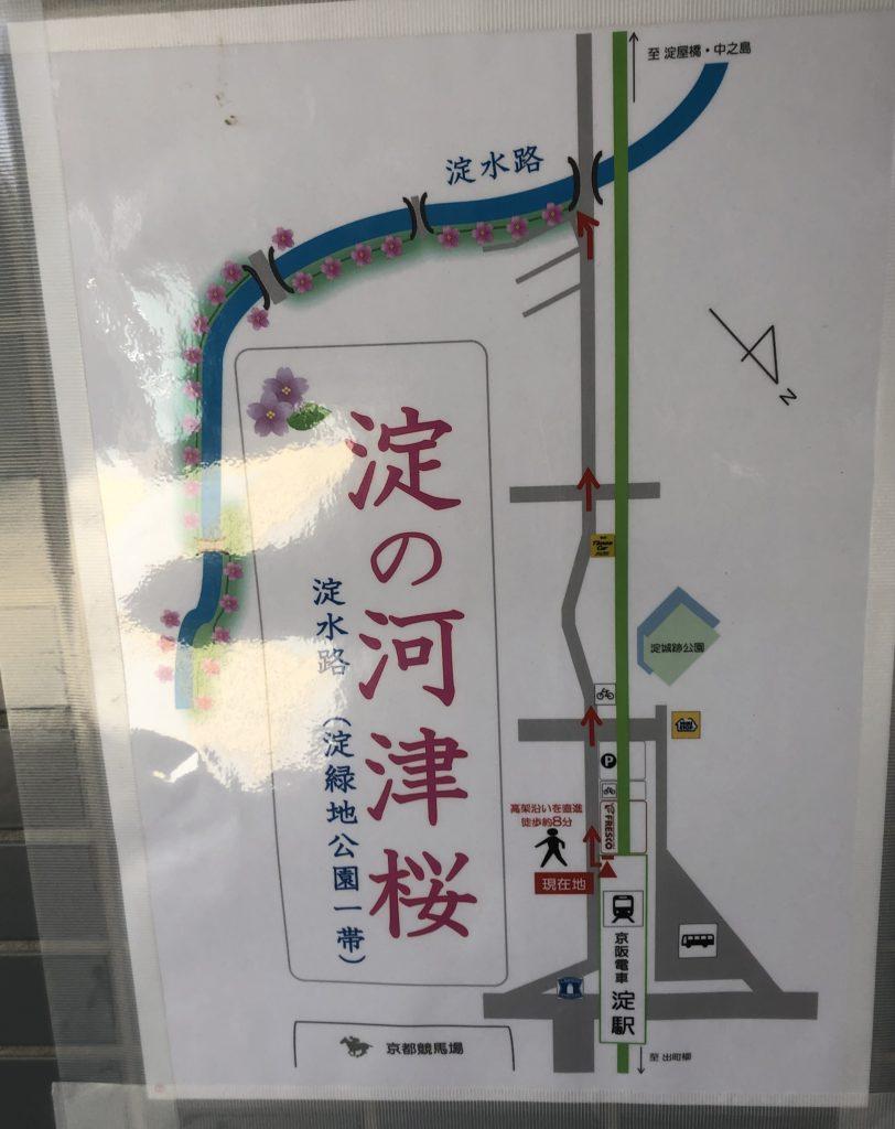 0d46e8c1e9c1f525f0c46ec3362172c3-e1583586166130-812x1024 京都府 淀水路の河津桜(京都でいち早く桜が満開になるおすすめの河津桜写真スポット! アクセス方法や駐車場、2020年桜の開花状況など)