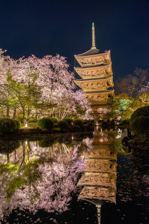 NIKON-CORPORATION_NIKON-D800E_1563501810-1563584568_13741 京都府 東寺(水面に映る五重塔と桜の美しい景色! 京都の春におすすめ桜写真スポット! 撮影した写真の紹介、アクセスや駐車場.ライトアップ.2020年桜の見ごろ予想など)